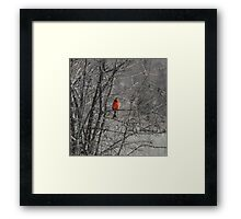 Winter Cardinal 2 Framed Print