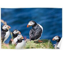 King Puffin Poster