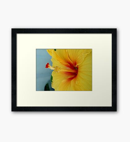 ELECTRIC HIBISCUS Framed Print