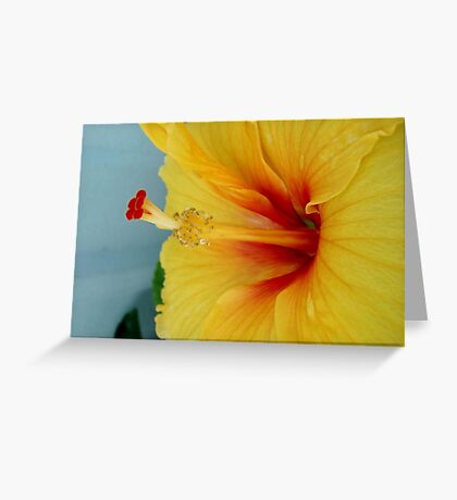 ELECTRIC HIBISCUS Greeting Card