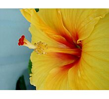 ELECTRIC HIBISCUS Photographic Print