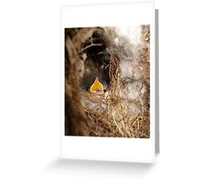 CAROLINA WREN NESTLING - OPEN WIDE Greeting Card