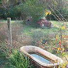 Bug , Bath & Beyond by bulldawgdude