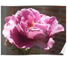 Rosas Moradas 5 Poster
