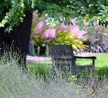 A Bench under a Shade Tree  by dez7