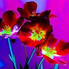 Dark Tulips by SomeGuyInNJ
