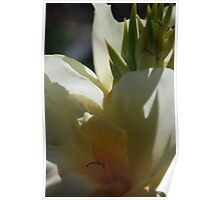 Lemon Cana Lily Poster