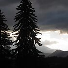 """Two Evergreens By Cloudy Mountains"" by dfrahm"