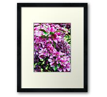 Cherry Blossoms 1 Framed Print