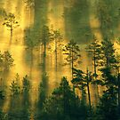 28.6.2011: Early Summer Morning II by Petri Volanen