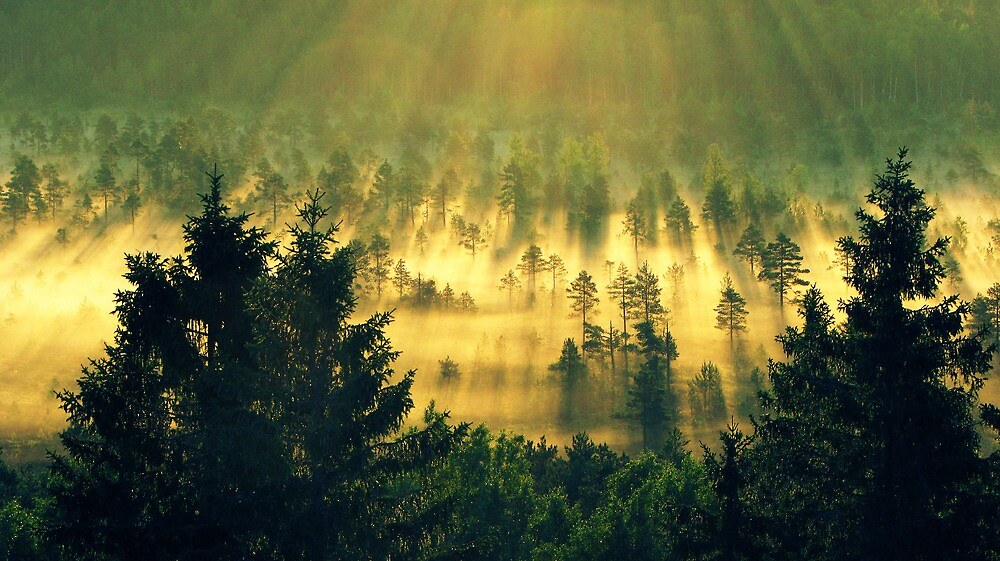 28.6.2011: Early Summer Morning III by Petri Volanen