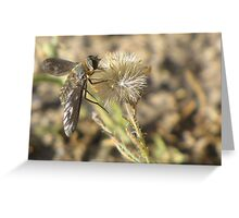 Bee Fly (family Bombyliidae) Greeting Card