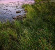 Twilight and Grass by Bob Larson