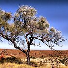 Lone Tree, Wolf Creek Crater, Western Australia. by Lynne Haselden