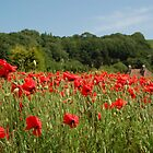 Alkham Poppies by FelicityB