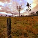 in search of the perfect tree line by blackspark