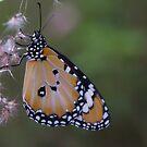 Beautiful Butterfly by Liz Worth