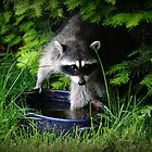 Our Friend The Raccoon Came A Calling by Jonice