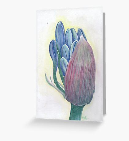Agapanthus awakening Greeting Card