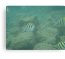 Puerto Rico Fish Canvas Print