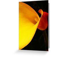 Zantedeschia! Greeting Card