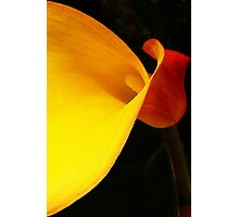 Zantedeschia! Photographic Print