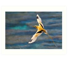 Golden Bosun In Flight Art Print