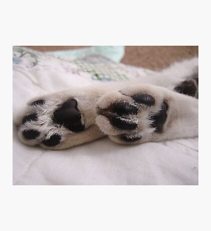 Chloe's Paws Photographic Print