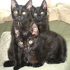 FIV Kittens by Tramper