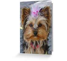 Yorkshire Terrier in NEW YORK Greeting Card