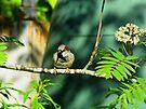 Sparrow by Carol Bleasdale