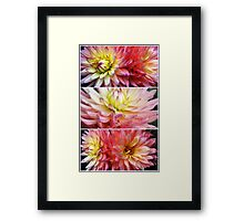 Dance of the Dahlia... Framed Print