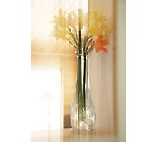 Clivia Flower In A Vase Photographic Print