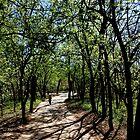 The Path Taken by aRj Photo
