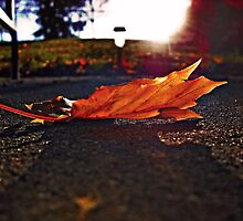 The Fallen Leaf by SanjayKalyan