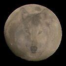 Wolf moon 1 by Borror