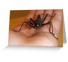 Betty - My Black Beauty Stick Insect Greeting Card