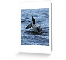 Loon 1 - Lake Muskoka Greeting Card