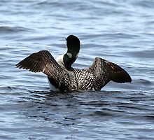 Loon 2 - Lake Muskoka by Carolyn  Reinhart