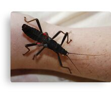 Black Beauty Stick Insect Canvas Print