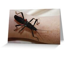 Black Beauty Stick Insect Greeting Card