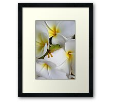 Frangipani Dreaming - Award Winner Framed Print