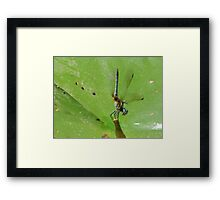 Dragonfly Looks Framed Print