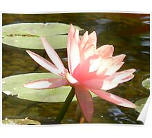 Lights of the Water Lily Poster