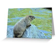 Groundhog Along The River Greeting Card