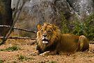 King of the Beast by Joe Elliott