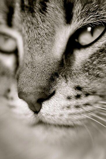 Miss Kitty by Ainsley Kellar Creations