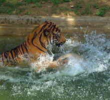 Splish Splash! by Chuck Chisler