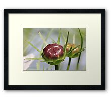 Spiked Flower Head Framed Print