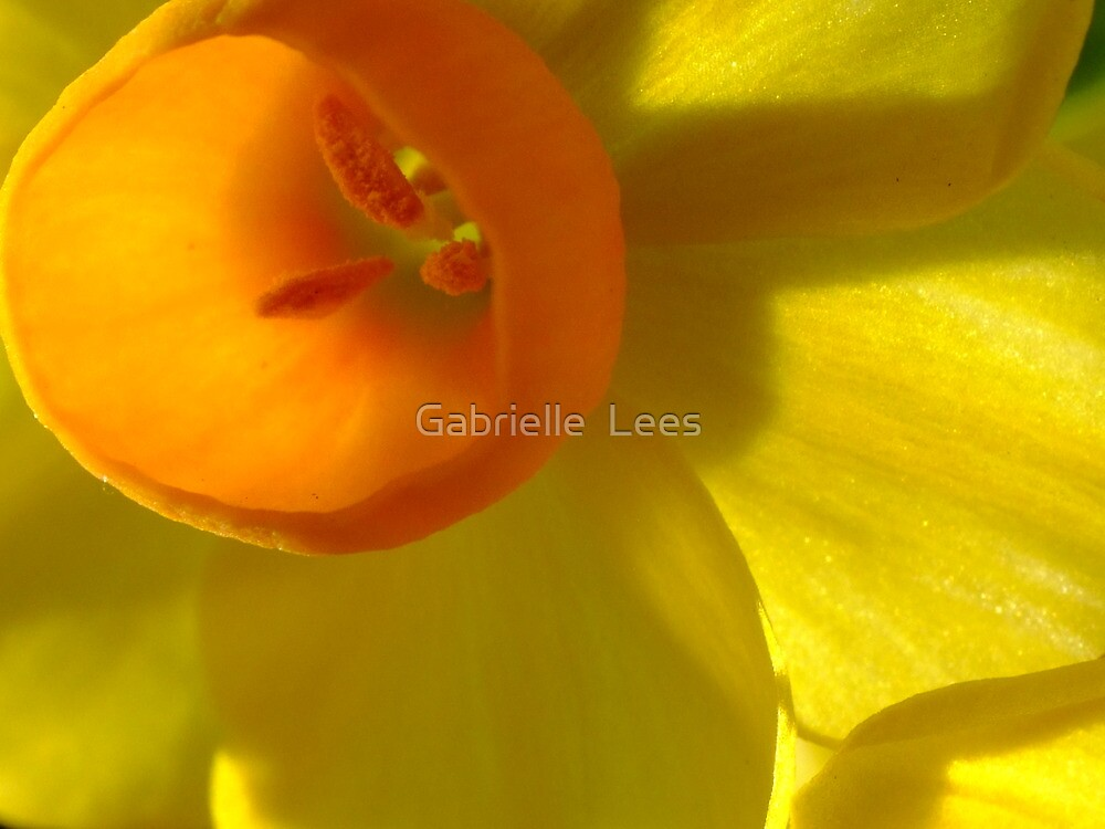 Let The Sunshine In by Gabrielle  Lees